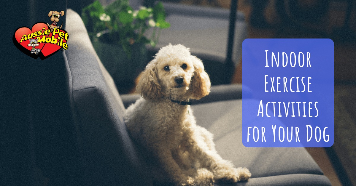 Indoor Exercise Activities For Your Dog Aussie Pet Mobile