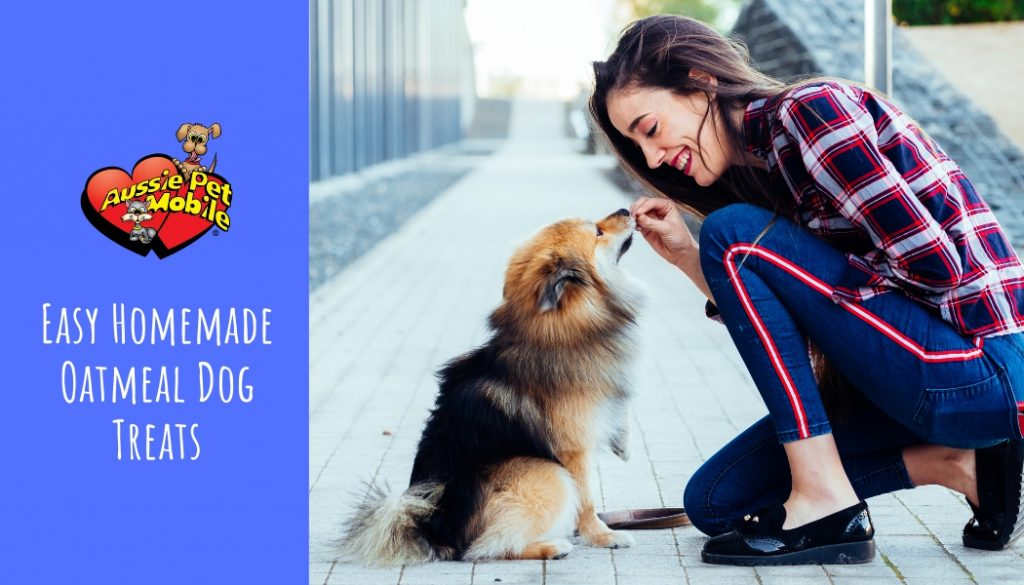 Easy Homemade Oatmeal Dog Treats May 2021